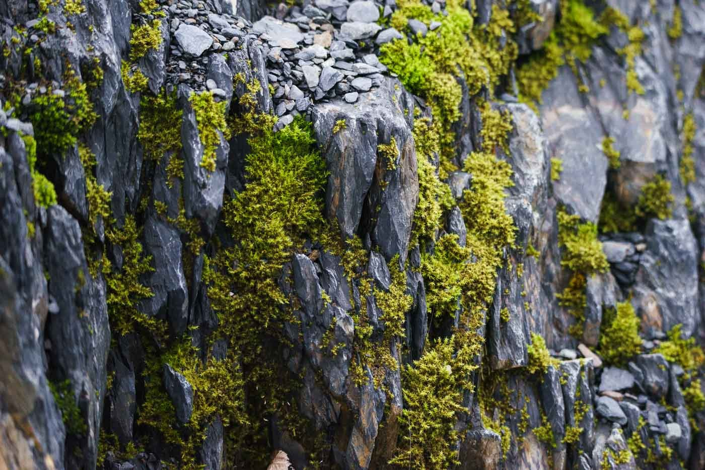 Moss in Alaska with the Tamron 150-600mm f/5-6.3